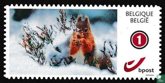 Belgique [BEL] - Joyeux hiver