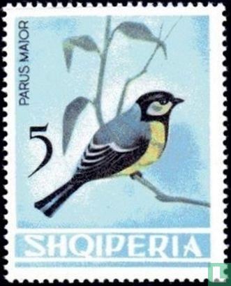 Albanien [ALB] - Kohlmeise