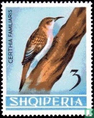 Albanien [ALB] - Waldbaumläufer