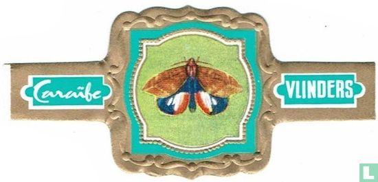 Caraïbe - Phylodes Verhuelli - V. O-Indië tot de Phillipijnen