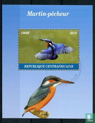 Centraal-Afrikaanse Republiek / Keizerrijk [CAF] - ijsvogel