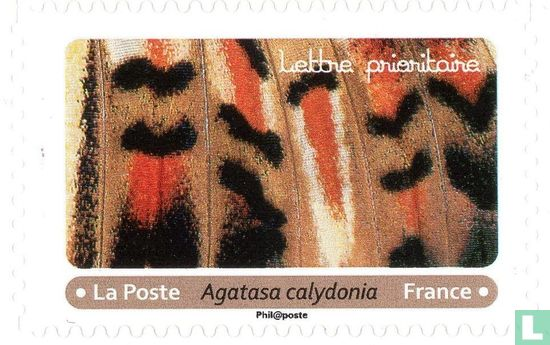 France [FRA] - Butterfly effects