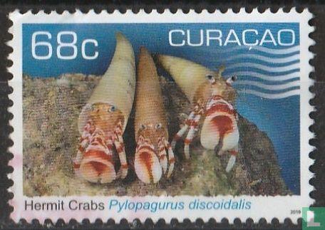 Curaçao [CUW] - Pylopagurus Discoidalis