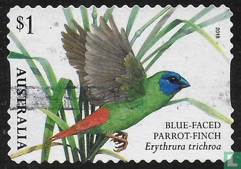 Australia [AUS] - Birds