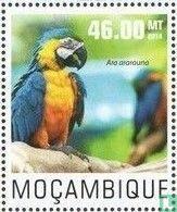 Mozambique - Perruches