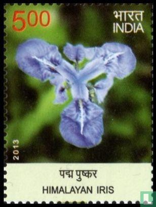 India - Bloemen