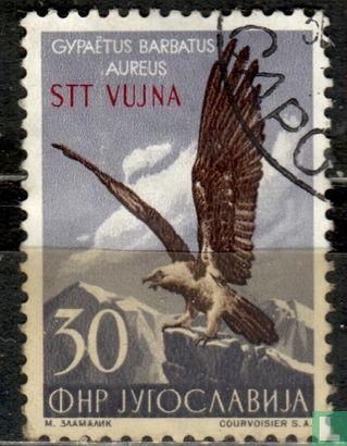 Yougoslavie - Istrie - Faune