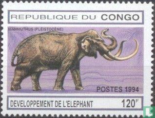 Congo-Brazzaville - Olifanten