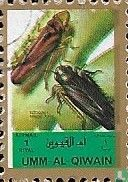 Insects (small size)