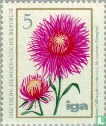 RDA - Fleurs