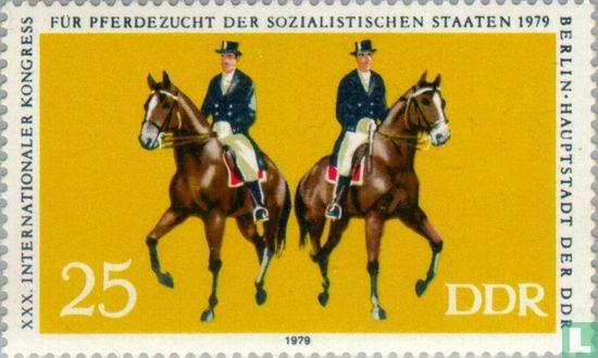 DDR - Paardensport