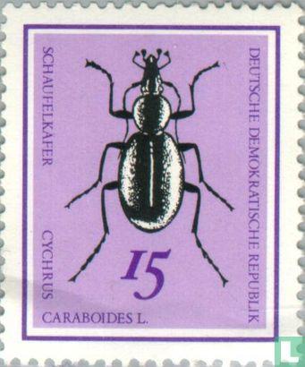 RDA - Coléoptères
