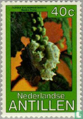 Antilles néerlandaises - Fleurs