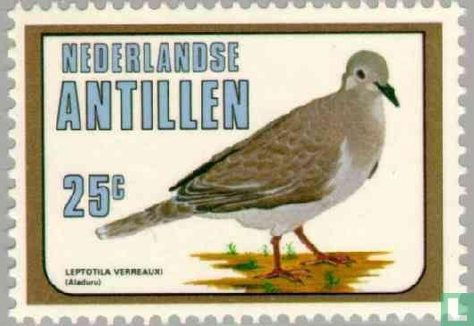 Antilles néerlandaises - Colombe de Verreaux