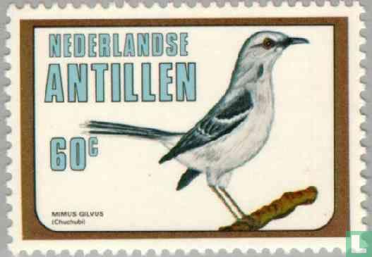 Antilles néerlandaises - Moqueur des savanes