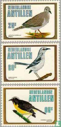 Antilles néerlandaises - Oiseaux