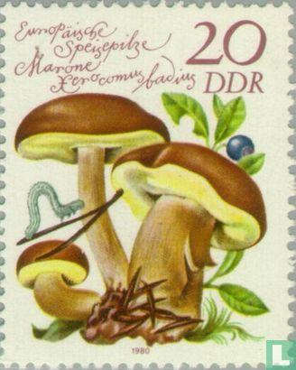 GDR - Mushrooms