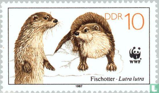 GDR - Fishing Otter