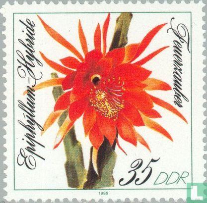 DDR - Bloemen