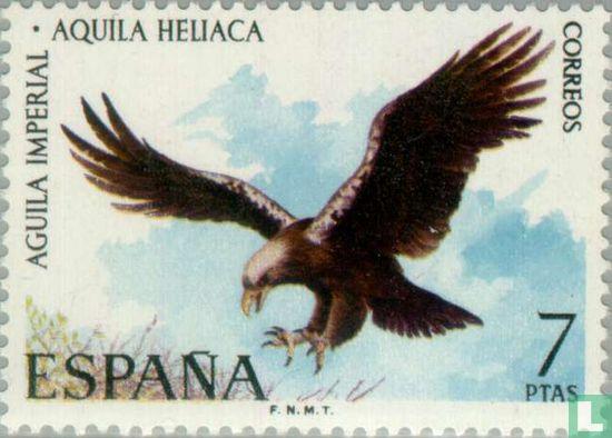 Spanien [ESP] - Vögel