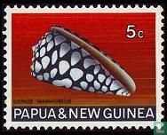 Papua New Guinea - Shells
