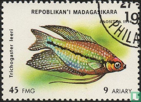 Madagascar - Fish