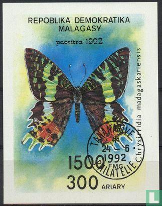 Madagascar - Butterflies