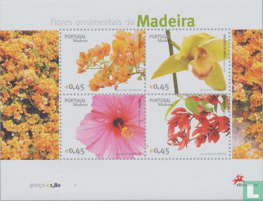 Madère - Fleurs