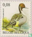Belgium [BEL] - Birds