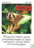 Albert Heijn - Indonesië - Plompe lori