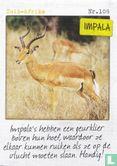 Albert Heijn - Zuid-Afrika - Impala