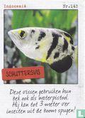 Albert Heijn - Indonesië - Schuttersvis
