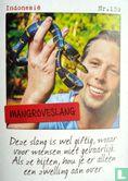 Albert Heijn - Indonesië - Mangroveslang