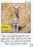 Albert Heijn - Zuid-Afrika - Serval
