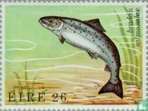 Zeedieren kopen