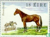 Pferde-