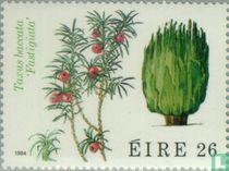 Flora kopen