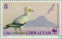 Vogels van Gibraltar