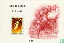 Ramp Bois du Cazier