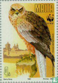 WWF - Trekkende Roofvogels