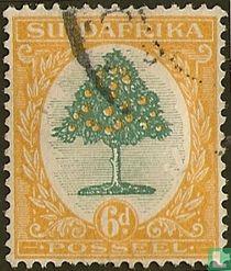 Sinaasappelboom (Afrikaans)