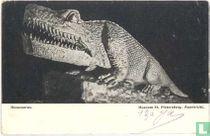Maastricht museum St. Pietersberg. Masasaurus