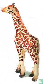 Giraf baby