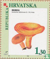 Inheemse eetbare paddenstoelen