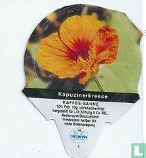 Heimische Blumen - Kapuzinerkresse