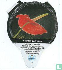Heimische Blumen - Flamingoblume