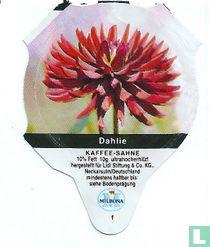 Heimische Blumen - Dahlie
