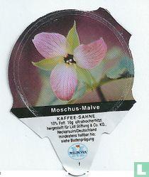 Heimische Blumen - Moschus-Malve