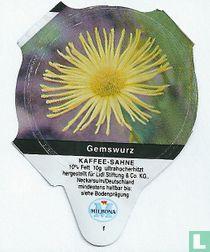 Heimische Blumen - Gemswurz