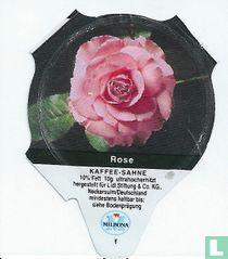 Heimische Blumen - Rose